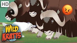 WILD KRATTS | STRONG Animals! | Animal Predators