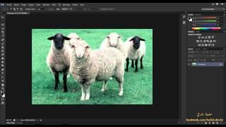 10 - تعرف على اساسيات التحديد ( دورة فوتوشوب  Photosop CS6 )