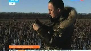 Урожай семян подсолнечника «Сингенты» собрали в январе(, 2014-02-03T05:58:18.000Z)