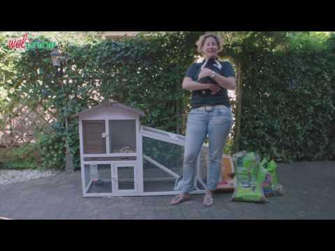 Hoe verzorg je een konijn