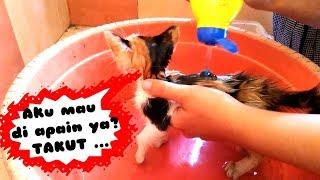 Download Video Memandikan Kucing Lucu Nemu Di Pinggir Jalan Depan Rumah Kehujanan MP3 3GP MP4