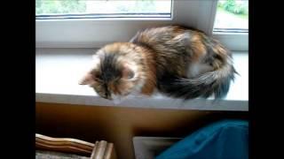 Кошка, что тебе снится
