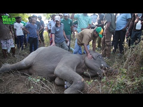 Elephant gets knocked down by a bus, gets treated and made alive en streaming