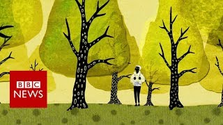 How trees secretly talk to each other - BBC News