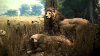 Video#584 American Museum of Natural History Pt 5