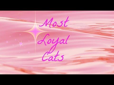 Top 10 Most Loyal Cats