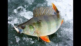 УБИЙЦА ОКУНЯ Нереальная Рыбалка по первому льду Ловля окуня на блесну