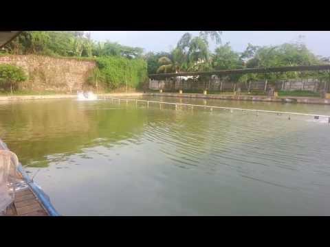 Pemancingan Rajawali (Kolam Galatama Ikan Bawal)