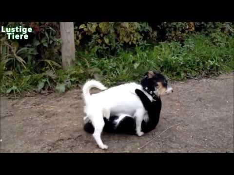 Hunde gegen Katzen Zusammenstellung 2014