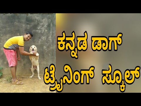 Labrador dog training in kannada- dog training without food  ( no specking only hand signal)