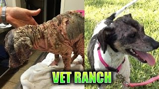 Severely Neglected Dog Makes Complete Transformation