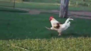 Прикольные танцы животных