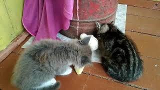 Мирный союз животных!