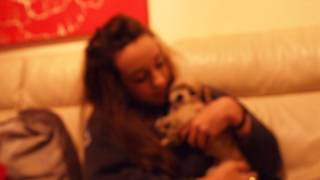 6-7 Week Old Yochon Yorkie X Bichon Puppy Lulu Snaps