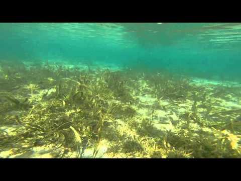 Morning swim at Balinsasayaw Resort seashore using my GoPro Hero3+