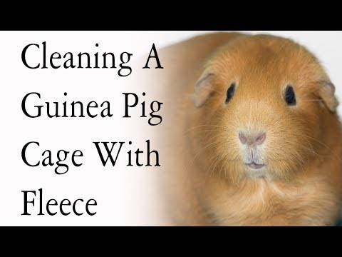 Cleaning a diy guinea pig cage with fleece bedding youtube for How to clean guinea pig cages