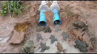 Smart Girl Make Deep Hole Bottle Frog Trap To Catch A Lot Of Frog