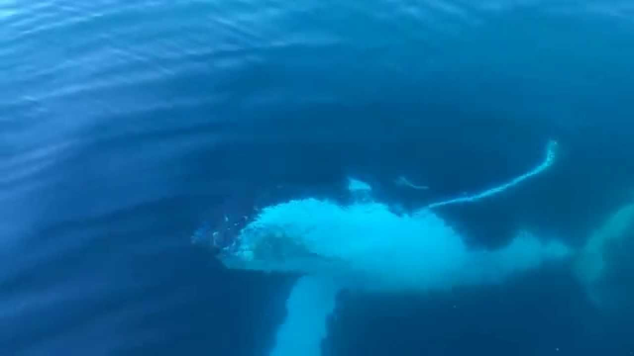Whale watching kicks off in Geographe Bay - Your Margaret