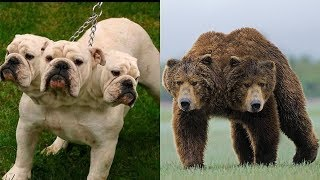 इन विचित्र जानवरों को देखकर आपकी आँखे खुली रह जाएगी \ amazing wild animals in the world