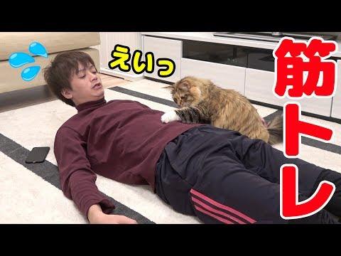 猫と筋トレしたら腹筋崩壊したwww