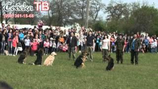 Кривой Рог! Ближайшая выставка собак   21 сентября 2014 в Кировограде  Поехали с нами!