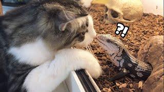 고양이가 도마뱀 머리 쓰담쓰담 해줬어요 (파충류 근황)