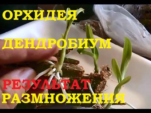 Орхидея в доме: приметы и суеверия, можно ли держать