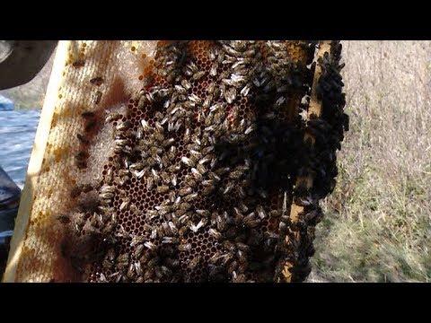 В погоне за медом: фермеры Краснодарского края готовятся к Кубанской ярмарке