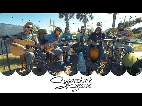TreeHouse! - Babylon Pressure (Live Acoustic) | Sugarshack Sessions