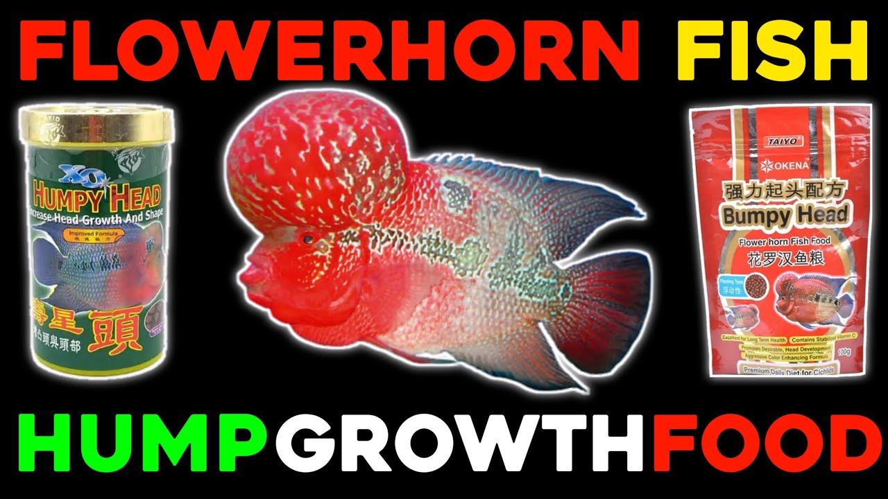WHAT IS THE BEST FOOD FLOWERHORN FISH???? BEST FOOD FLOWERHORN FISH ( TOP 5  ) HINDI