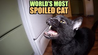 Talking Kitty Cat - World's Most Spoiled Cat thumbnail