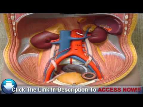 detecting-kidney-disease:-stage-five
