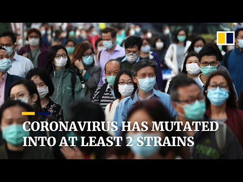 Chinese scientists identify two major types of the new coronavirus in preliminary study