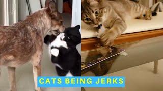 Cats Being Jerks Supercut