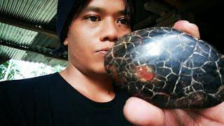 Menemukan Batu Mustika Mahkota King Kobra Terbesar