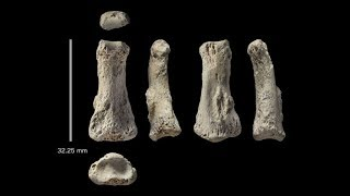 The 88 000 Year Old Middle Finger Found In Saudi Arabia Could Rewrite Human History
