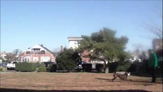 "Long Island Dog Training ""donovan Pinscher"" K9control"