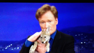 Conan O'Brien feels a connection with a coyote pup.