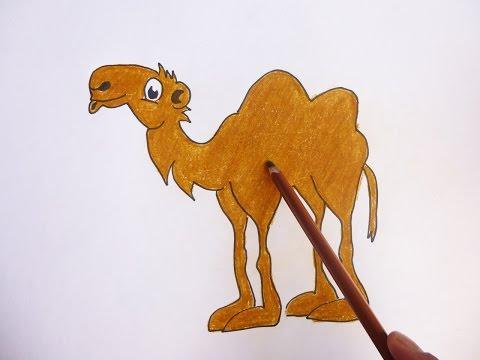 Dibujando y coloreando camello - Camel drawing and coloring