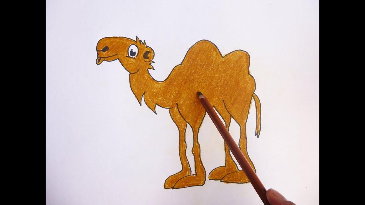 Dibujando y coloreando camello - Camel drawing and coloring - YouTube