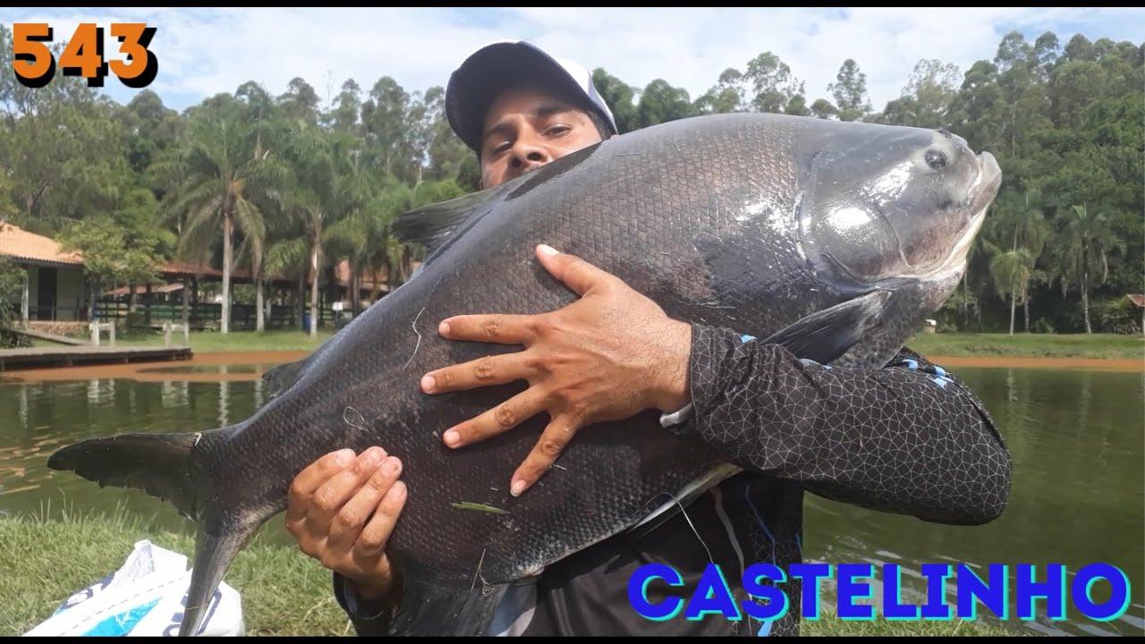 Castelinho - Uma pescaria bem diferente - Fishingtur na TV 543