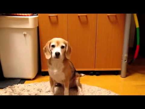 Cute Puppy Catches Ball in Paws