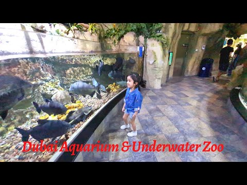 Dubai Aquarium & Underwater Zoo| One of the largest indoor aquariums in the world |The Dubai Mall