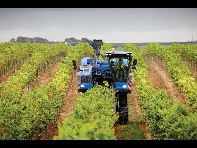 德國機械為啥牛,連葡萄都有專業收割機,壹天幹完壹座莊園