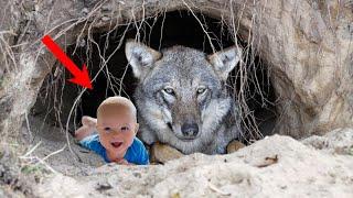У егеря кровь ЗАСТЫЛА в жилах, когда он увидел НОВОРОЖДЕННОГО сына, сосущего волчицу в логове