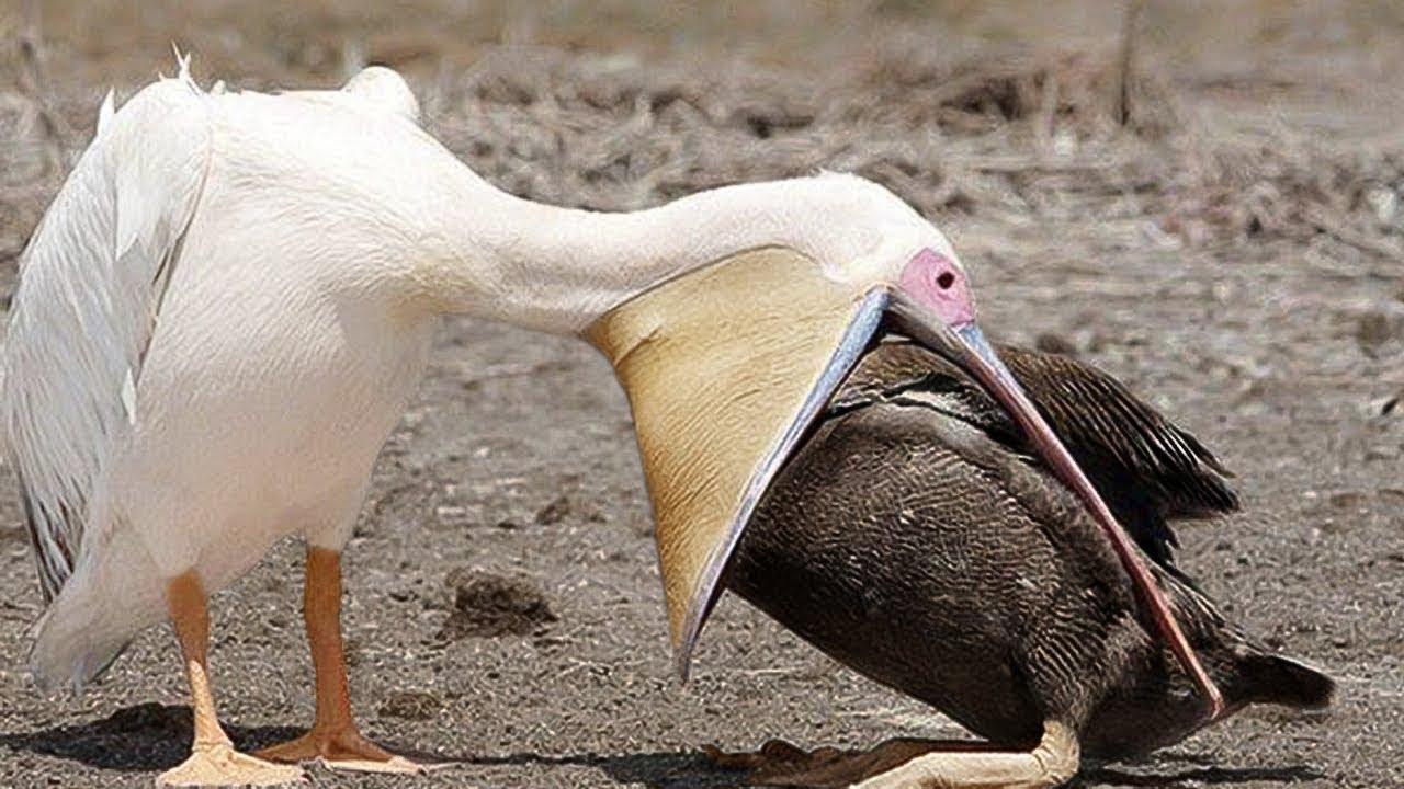 أخطر الحيوانات فى العالم و التى قد تبدو لطيفة جدا