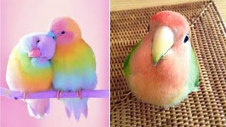 Baby Animals  Funny Parrots and Cute Birds Compilation (2021) Loros Adorables Recopilación #29