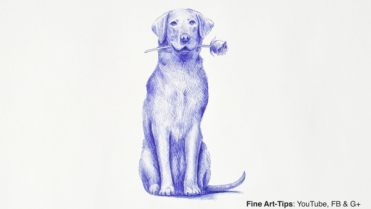 How to Draw a Labrador Retriever Dog - Narrated, step by step