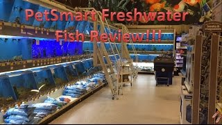 PetSmart Freshwater Fish Review