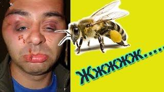 Пчелы-это жесть! Топ приколы с животными 2016 Приколы с пчелами   Top 10